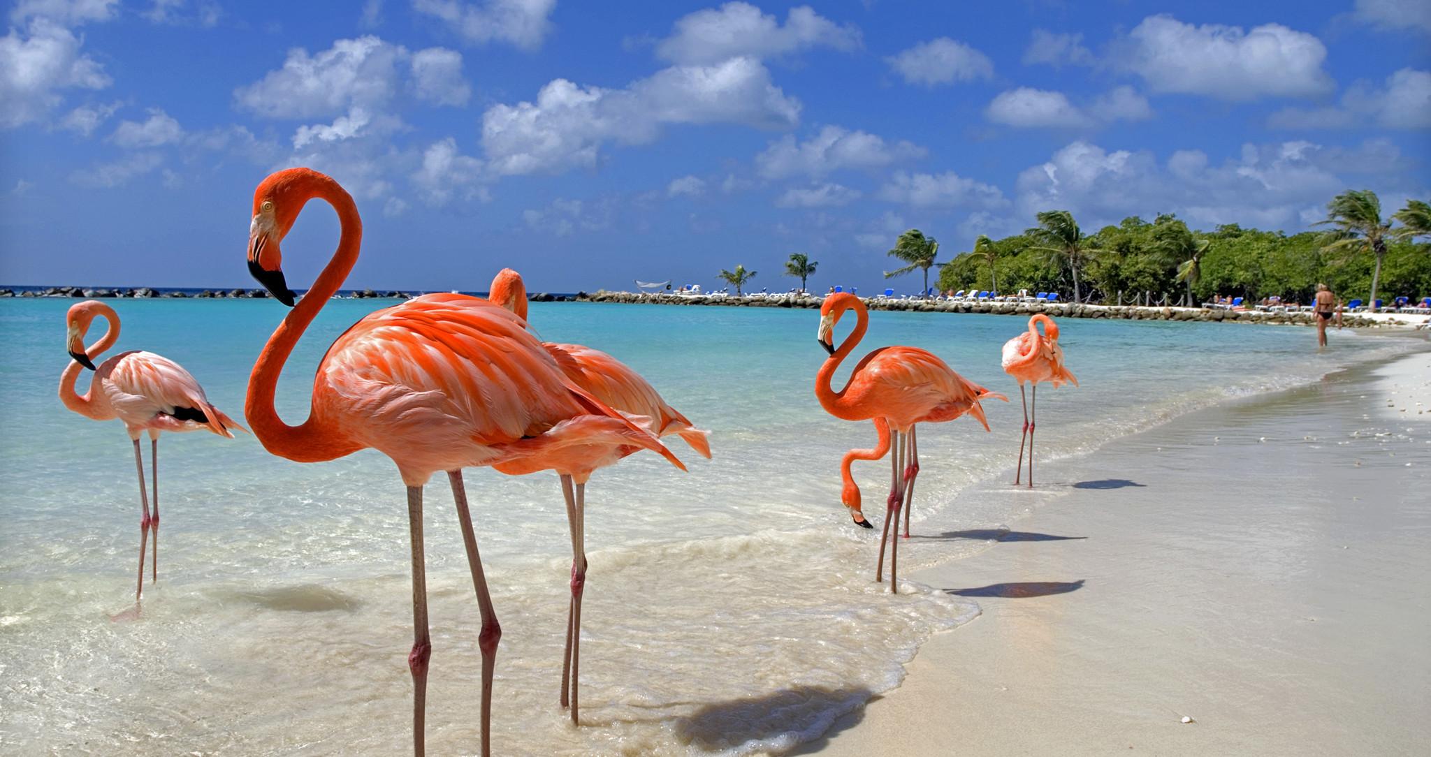 Pink flamingók