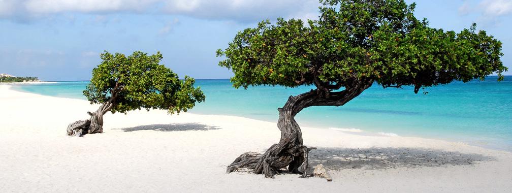 Divi-divi fák, főként a Karib-térség Aruba nevű szigetén honos. Ezek a göcsörtös fák gyakran ferdén, a szélirány felé dőlve nőnek.Ha egy nyaraló eltévedt a szigeten, a fák koronája alapján is tájékozódhat, azok ugyanis mindig nyugat felé mutatnak, ahol a sziget legtöbb hotelje is található.