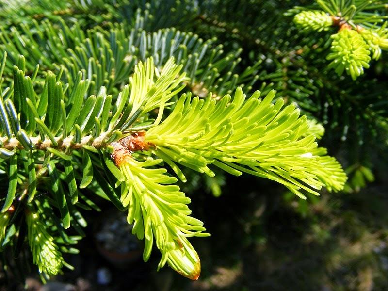 Kép: Szeretetrehangoltan.blogspot.com