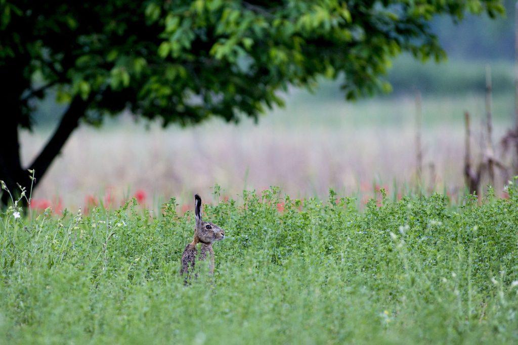 Csodarét / Forrás: alfahir.hu / Fotó: Béli Balázs